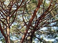 Il consolidamento dei rami: una valida alternativa alla potatura