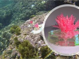 """ENEA mette """"in mare"""" le prime alghe artificiali per studiare il cambiamento climatico"""