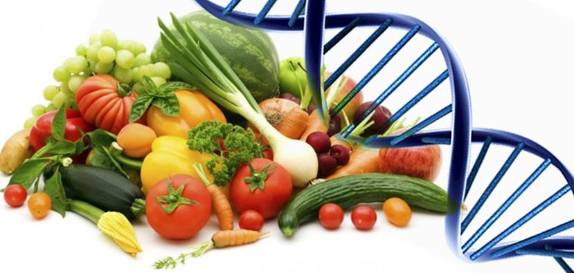 agricoltura transgenica