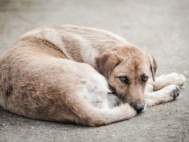 S.O.S. cani abbandonati