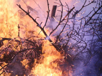 Disastro incendi boschivi, analisi e soluzioni