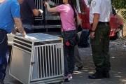 Maxi sequestro di 24 cani stipati in un appartamento a Roma