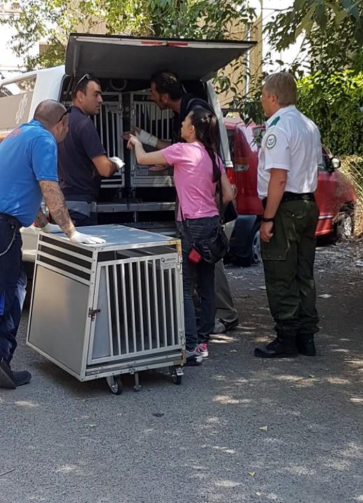 Maxi sequestro di 24 cani stipati in un appartamento a roma aknews - Sequestro prima casa ...