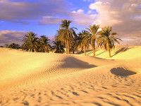 Fino a quanti gradi di aumento della temperatura terrestre potremmo resistere?
