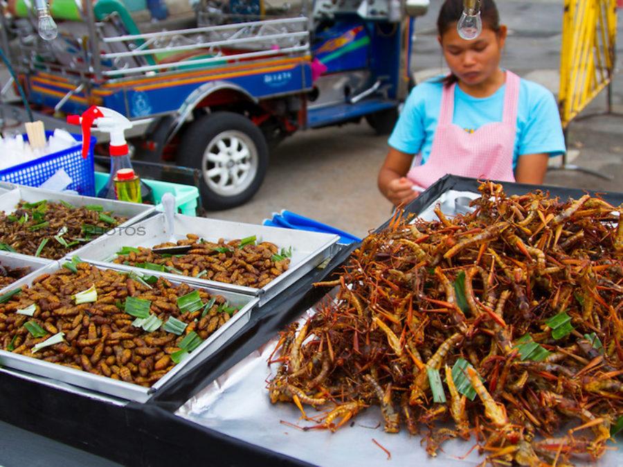 Nel futuro prossimo l'umanita' si nutrira' con le farine proteiche derivate dagli insetti