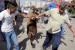 Brambilla, M5S e associazioni contro la festa del sacrificio