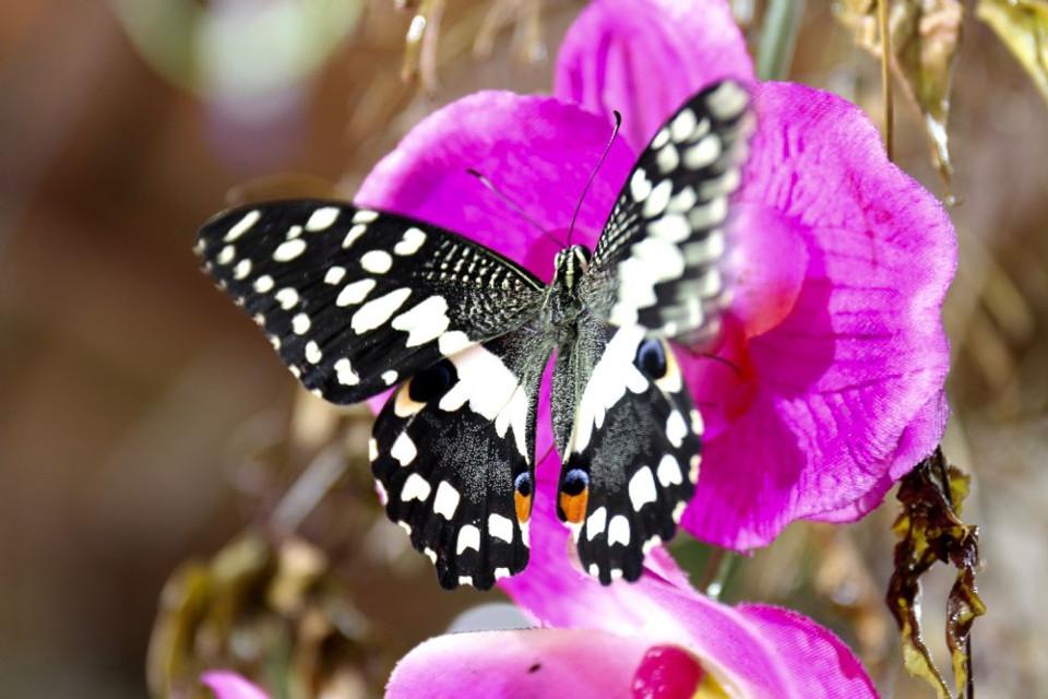la-casa-delle-farfalle