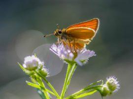 Anomola moria in Germania di insetti volanti… rischio effetto domino per piante ed uccelli