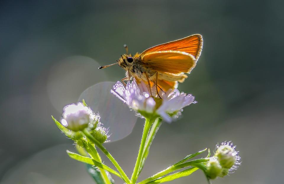 butterfly_960_720