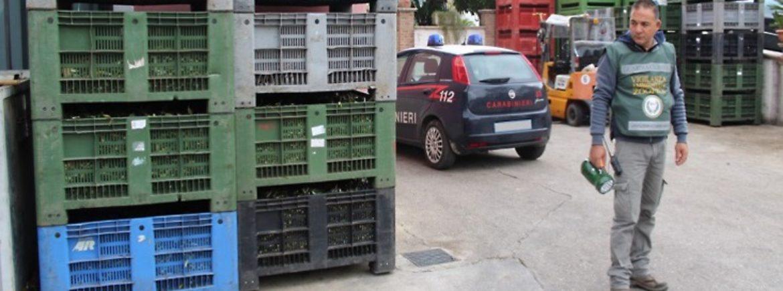 Le nostre guardie zoofile di Salerno in azione anti inquinamento insieme ai Carabinieri