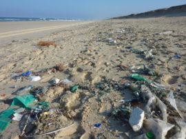 """Le """"plastiche"""" nella coste"""