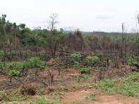 Un primo Stop al disboscamento dell'Amazzonia
