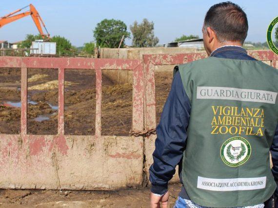 Operazione AK nel salernitano di tutto rilievo in difesa dell'ambiente e degli animali
