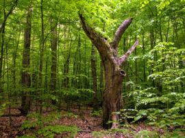 """Un milione di Euro per """"danneggiare"""" gli alberi monumentali!"""