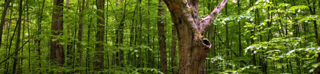 """Gli alberi parlano tra di loro, la foresta è interconnessa come """"Internet"""""""