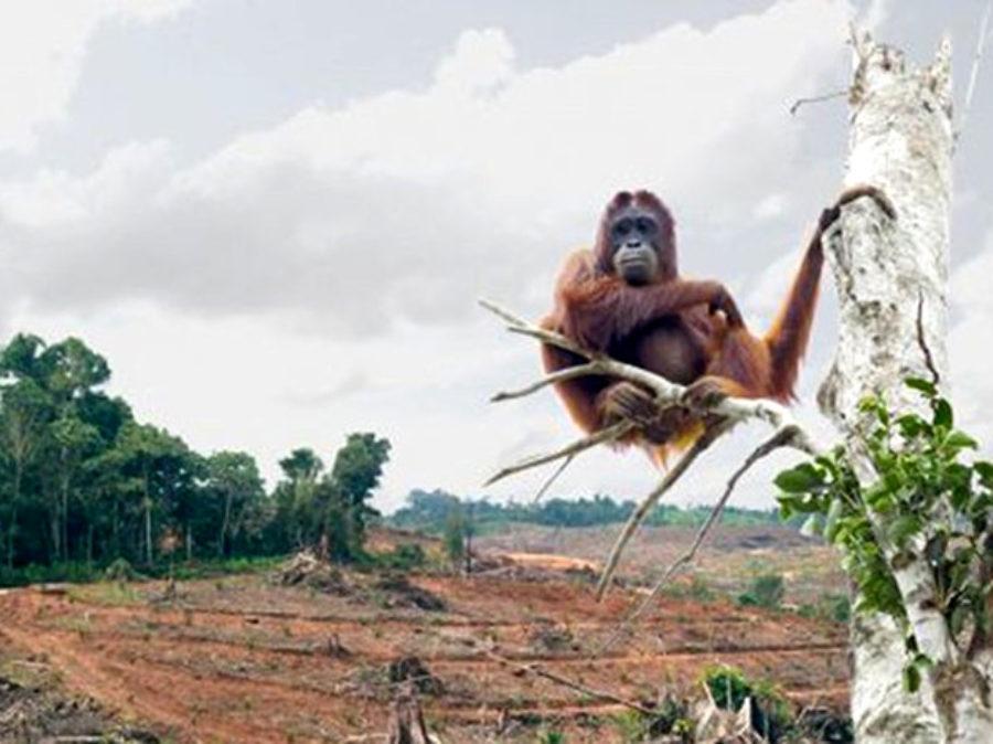 La fine inesorabile delle nostre foreste pluviali