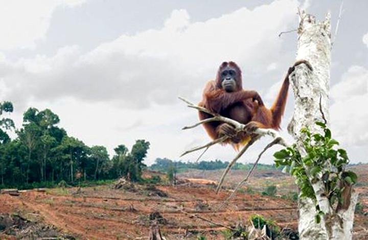 orango-oliodipalma