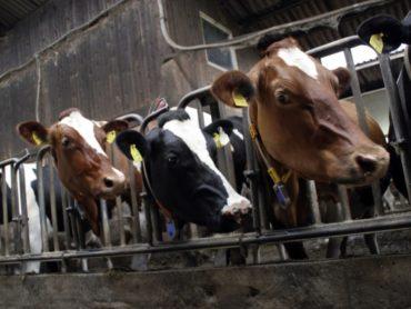 Problema alimentazione da cibo animale e impatto con l'ambiente e il clima