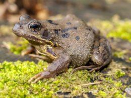 La scomparsa di rane e rospi