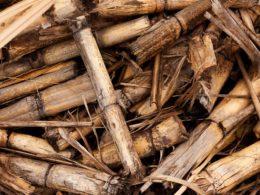 I pro e i contro nel produrre energia dalla biomassa