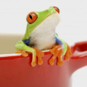 """The boiling frog syndrome"""