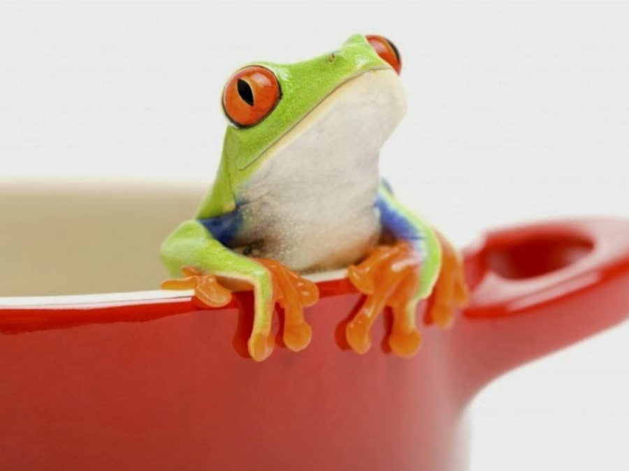 """""""The boiling frog syndrome"""""""