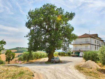 La longevità degli alberi ci accosta all'eternità