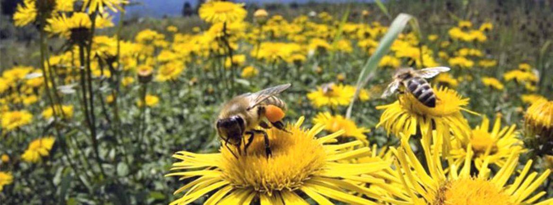 In 100 anni si rischia di dire addio agli insetti