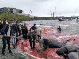 """La """"civilissima"""" Europa e la strage dei cetacei e di intere popolazioni di pesci nel Mar del Nord"""
