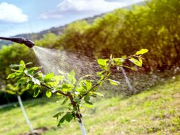 Salute umana a rischio: dalla CoViD-19 ai pesticidi