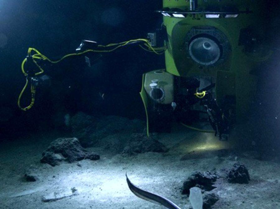 Anche a 11 km di profondità gli animali marini mangiano plastica