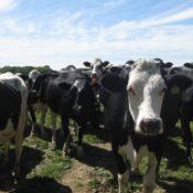 Basta carne o entro il 2050 sarà emergenza alimentare (allarme dell'ONU)
