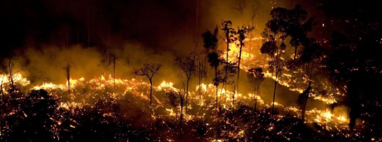 La criminale politica di disboscamento della selva amazzonica attuata dagli agricoltori