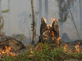 In Indonesia sono nate le case dell'ossigeno per respirare quando la foresta brucia