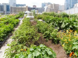 L'agricoltura urbana, i pro e i contro