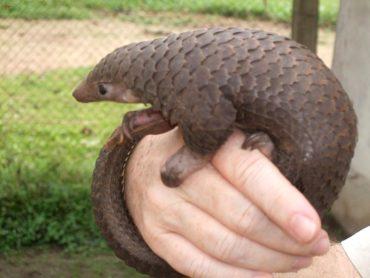 Sedici specie rischiano di scomparire per sempre nel 2020