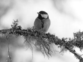 Aiutiamo gli uccelli selvatici a superare l'inverno