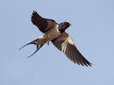 L'aumento della temperatura sta modificando le dimensioni degli uccelli: stanno diventando più piccoli, ma con ali più grandi