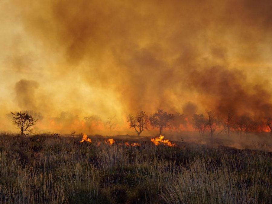 Australia in fiamme… non scrolliamo le spalle come se la situazione non ci riguardasse…