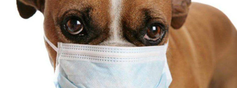 Il coronavirus NON può essere trasmesso dagli animali domestici