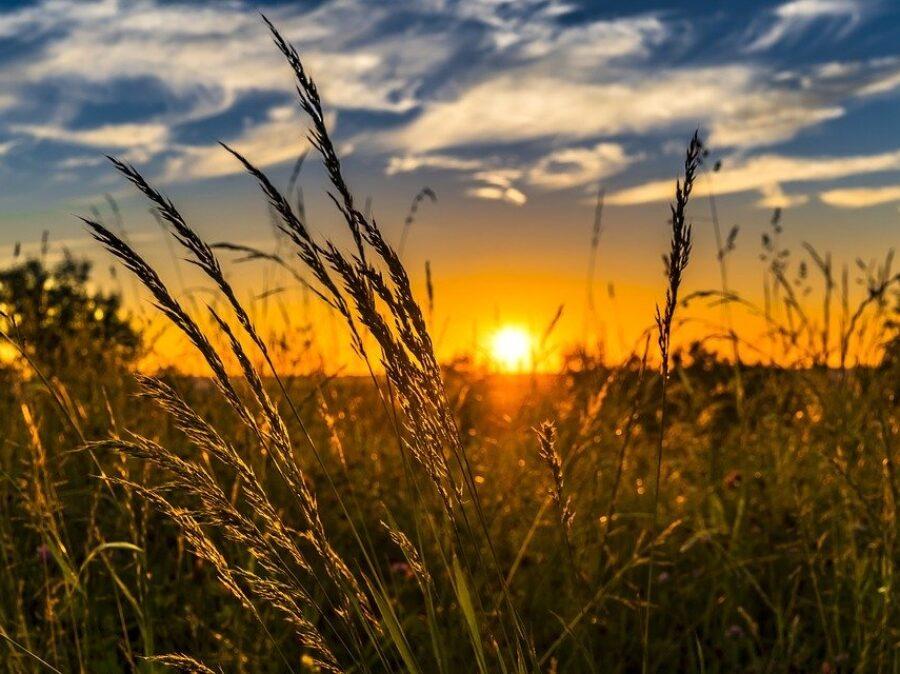 Per salvare l'ambiente e necessaria un'agricoltura amica dell'ambiente