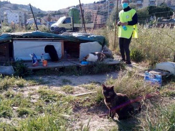 Accademia Kronos, cibo per animali donato alle famiglie di Alassio in difficoltà