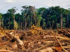 Accademia Kronos aderisce all'operazione del WWF contro la deforestazione del pianeta