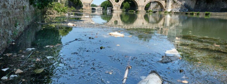 Probabili cause dell'ultima moria di pesci nel Tevere
