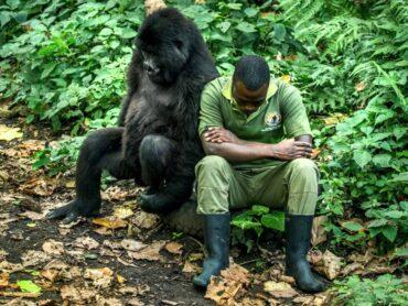 Indagine psicologica sul rapporto uomo-animale