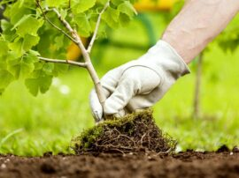 """Piantiamo """"miliardi"""" di alberi, si può fare… facciamolo!"""