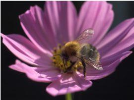 Un progetto di AK – UCI per salvare le api