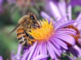 L'angolo della petizione: Salviamo le api (eliminiamo del tutto i NEONICOTINOIDI!)