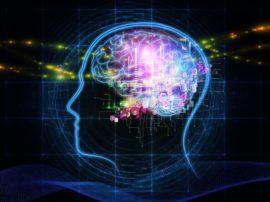 Studiare più a fondo il cervello umano