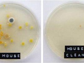 Batteri, germi e virus in ufficio: Office Bacteria Project (Coffee Break Viking)